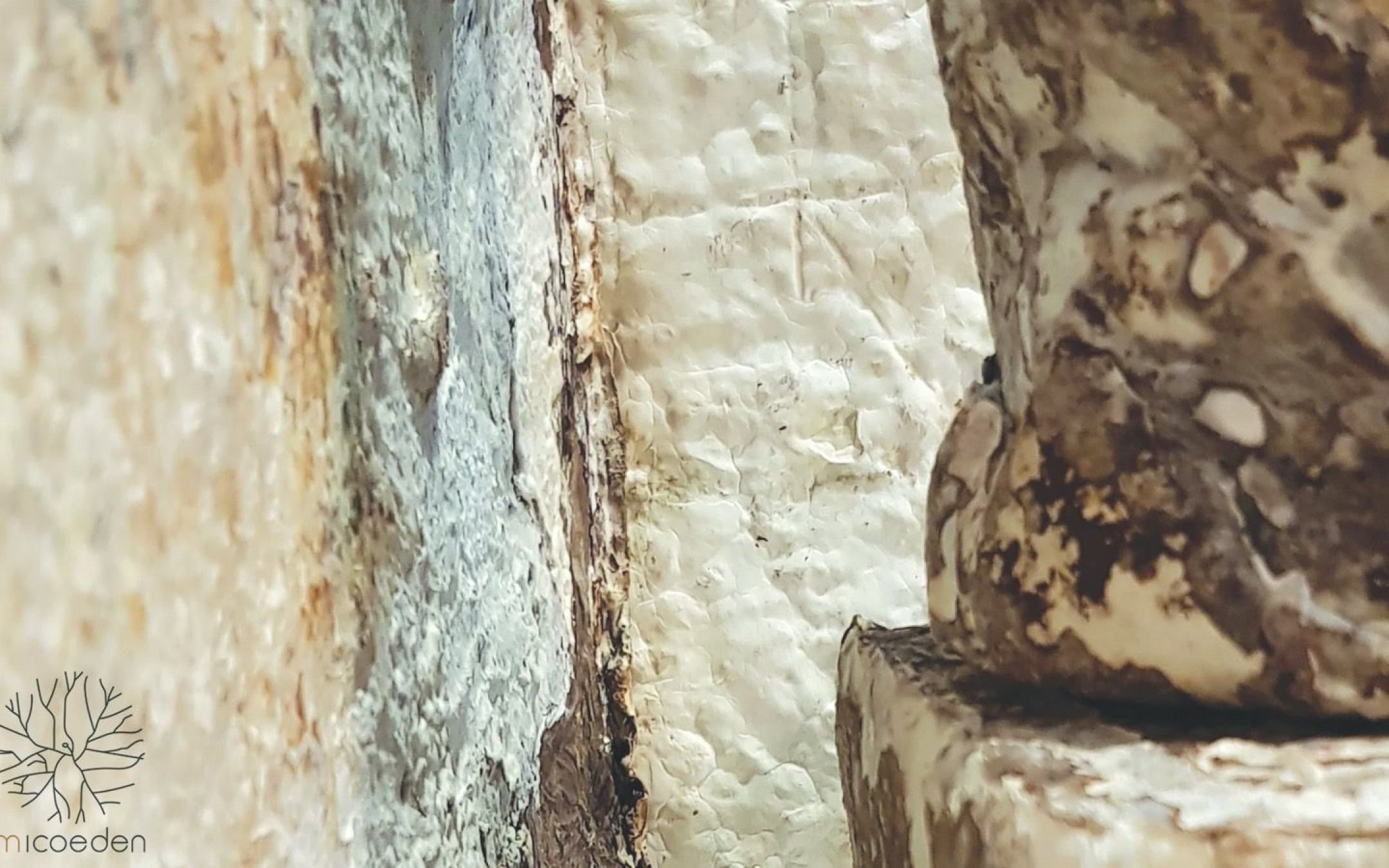 Compostable Insulation