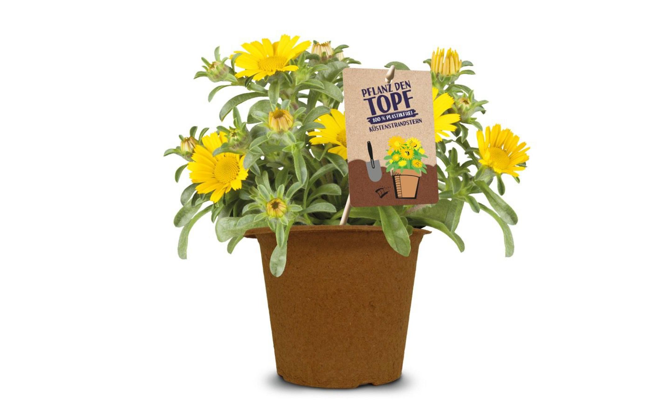 Plant the Pot
