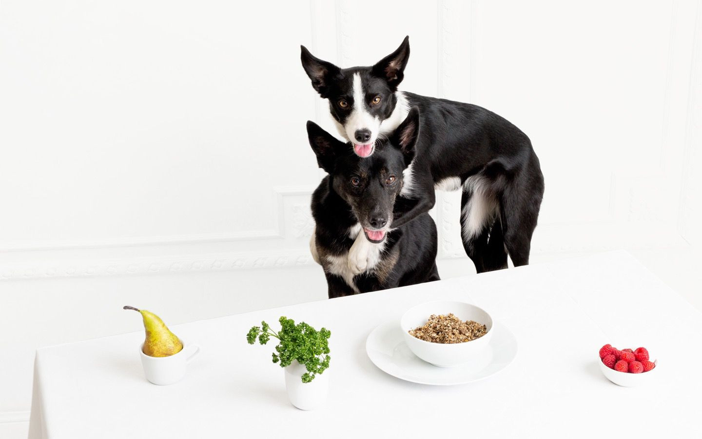 ROCKETO sustainable dog food