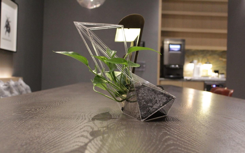 The Transparent Plant