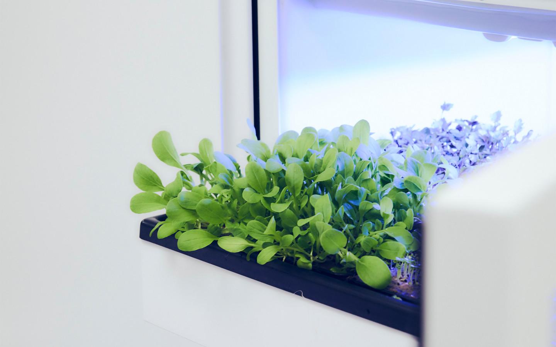 The plantCube